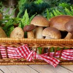 mushrooms-2678385_960_720